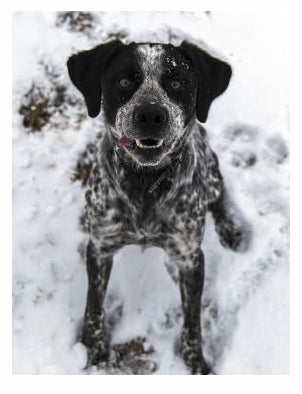 How to identify hypothermia on dogs