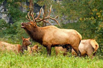 Elk Hunting on Public Lands