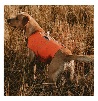 Orange, safety vest for dogs