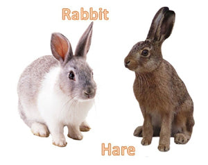 Differences between rabbits and hares