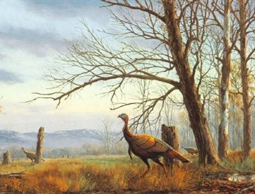 Fall Turkey Season