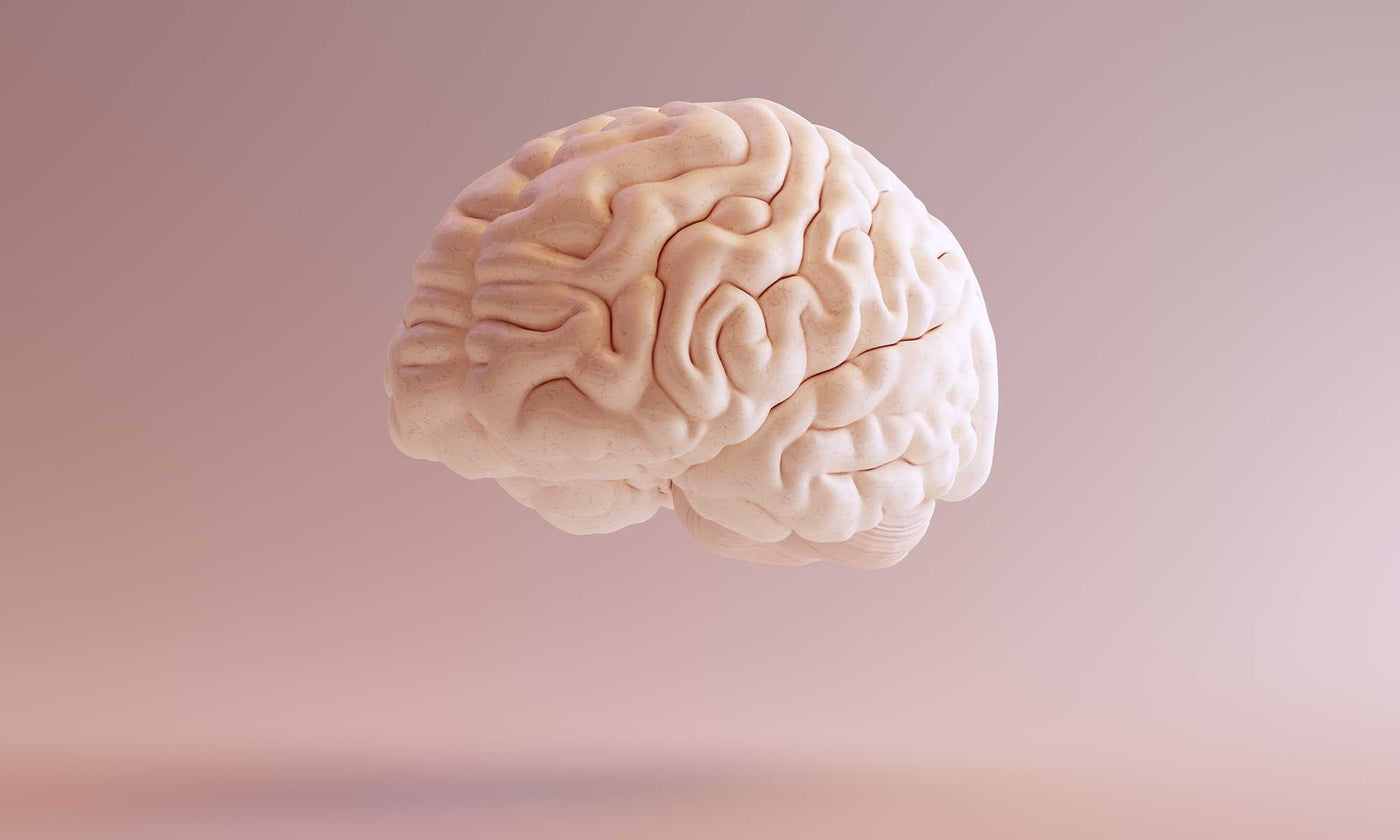 The Human Brain: A Quick Overview