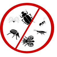 How To Get Rid of Bugs Around Your Home with Essential Oils