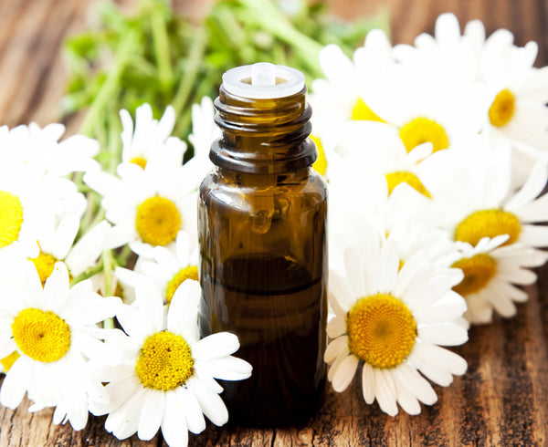 Chamomile Essential Oil (Roman) - Essential Oils by Mistico Mimi