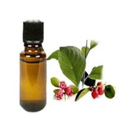 Wintergreen Essential Oil - Mistico Mimi Wellness Centre & Essential Oils by Mistico Mimi
