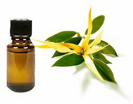 Ylang Ylang Essential Oil - Essential Oils by Mistico Mimi