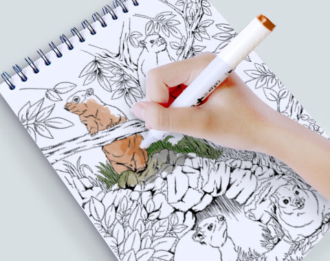 colorit artist quality paper for coloring, wild animals drawings, jungle coloring pages