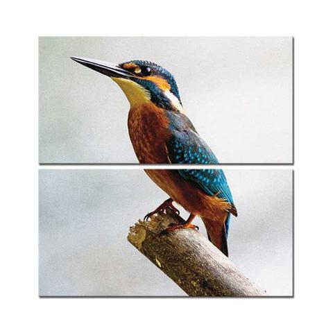 Colourful Bird - Canvas Print Stretched and Framed