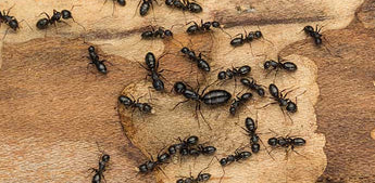 The Facts on Ants and Ant Bites