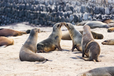 3 Best Beaches to Play with Sea Lions This Summer