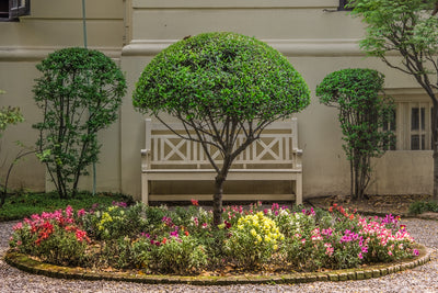 What You Need to Know About Using a Tree as Your Garden's Focal Point