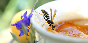 How To Decrease the Pain of Wasp Stings