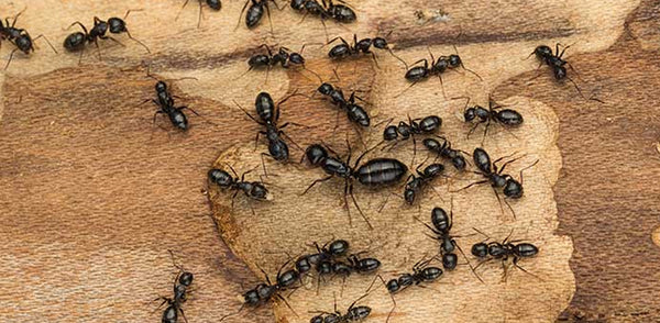The Facts on Ants and Ant Bites – Bug Bite Thing