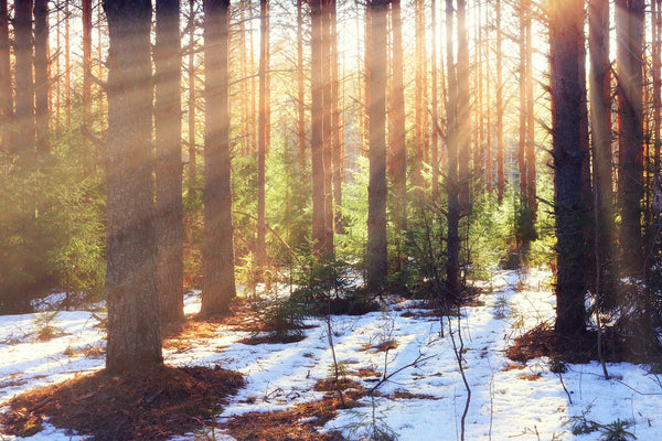 Snow melting in the forest