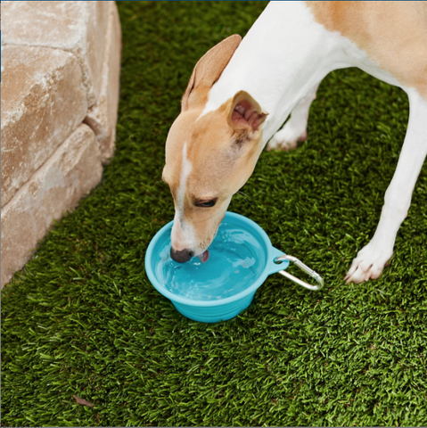 Frisco Collapsible Dog Bowl
