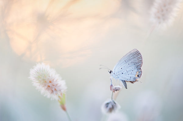 Butterfly in winter