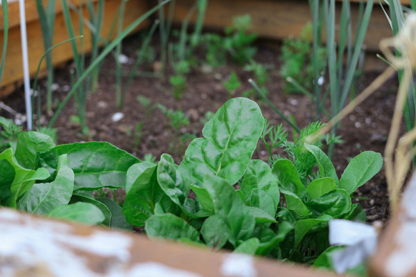 Grow your own vegetable garden at home