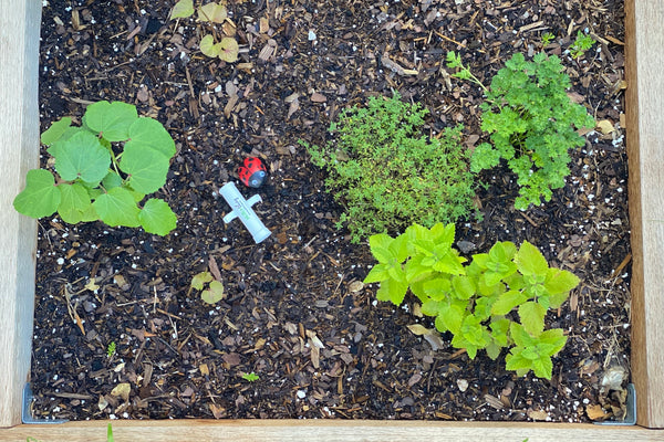 Know your hardiness zone before gardening