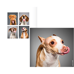 """Lick"" Dog Photography Book - Great Secret Santa Gifts Under $20"