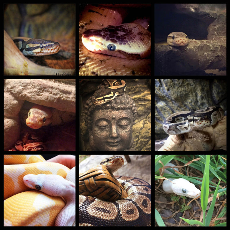 Support HagRoot's Snake Sanctuary