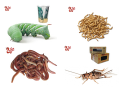 Live Insects and Worms