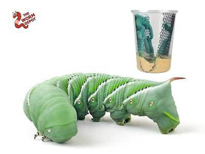 Live Hornworms aka Goliath Worms