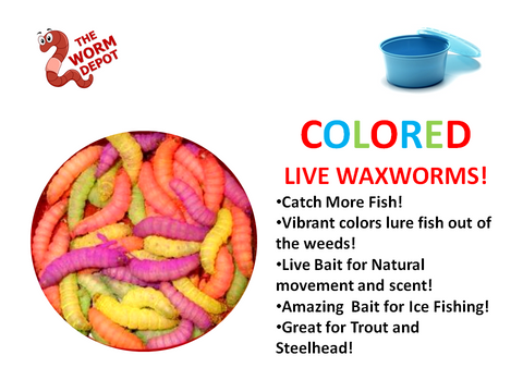 50 Colored Waxworms