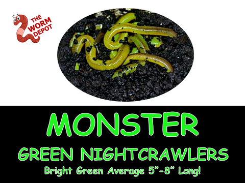500 Monster Green Nightcrawlers