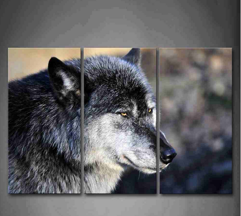 Gray Wolf Head Portrait