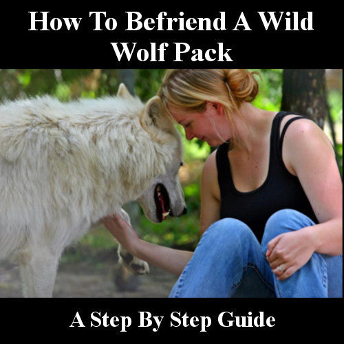 HOW TO BEFRIEND A WILD WOLF PACK - STEP BY STEP GUIDE