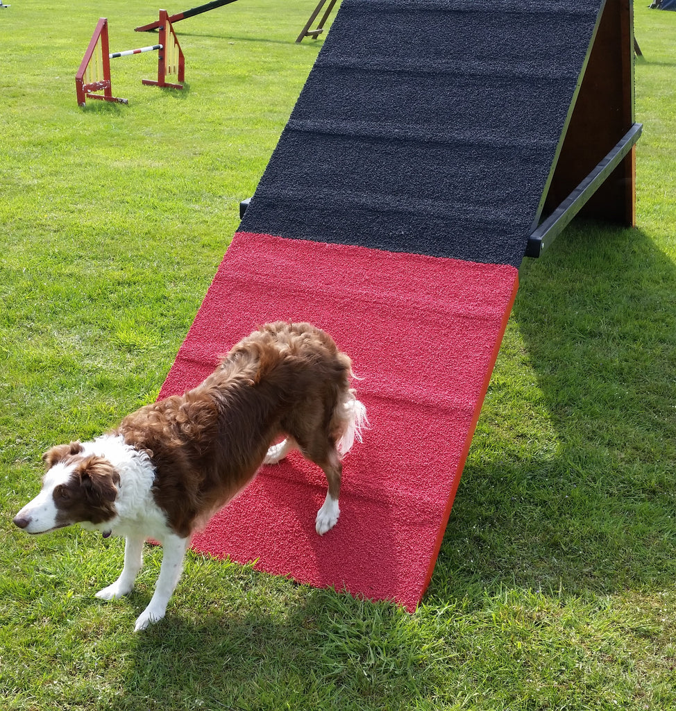 Competition A-frame with slats – Longfield Agility Solutions