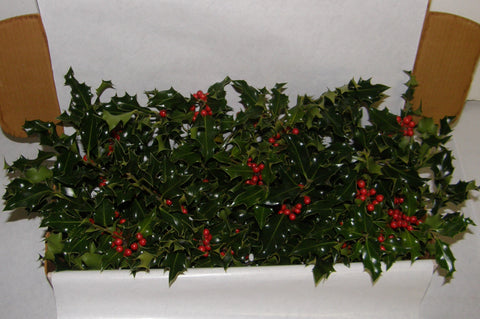 1G - GAIETY - Boxed Holly