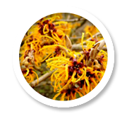 witch hazel for hemorrhoids