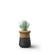 Soma Planter - Table Top - Small Wood|Top