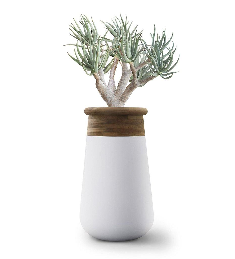 Soma Planter - Extra Large Wood Top