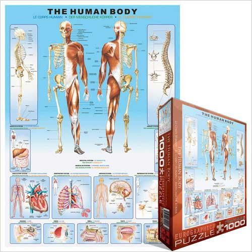 Puzzle The Human Body - Jouets LOL Toys