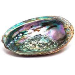 Abalone Mother of Pearl