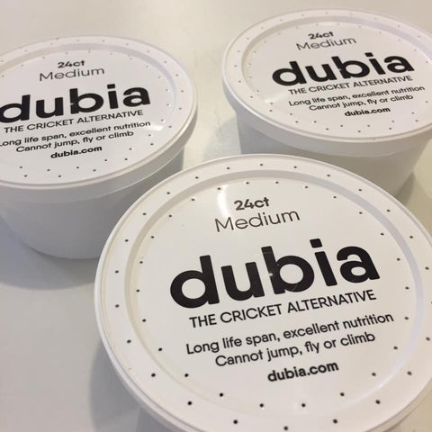 Pre-Cupped Dubia - DubiaRoaches.com