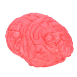 Fake Human Brain Prop