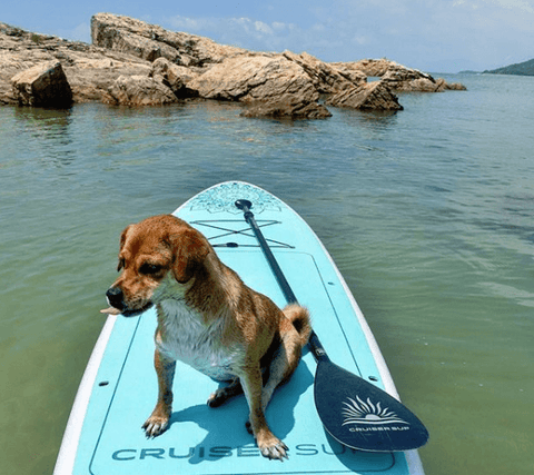 Paddle boarding with a dog