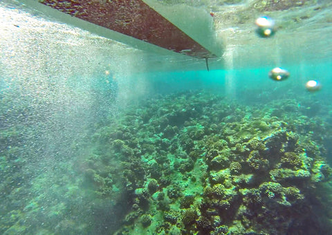 View of a Paddle Board from Underwater