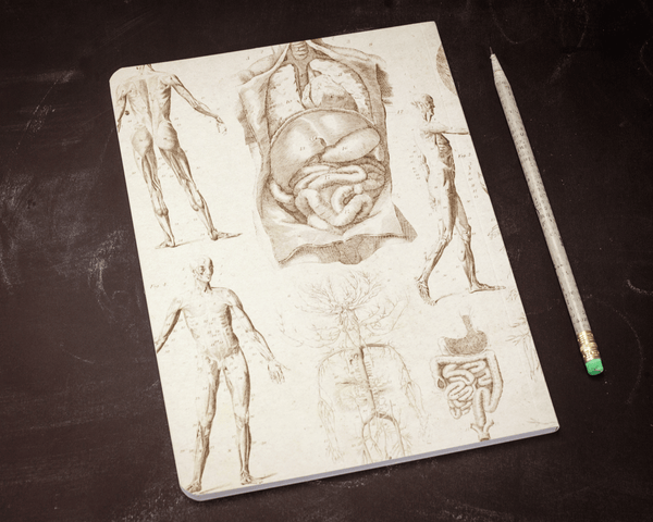 Human Anatomy Softcover Notebook Back Cover - Organs, circulatory system, digestive system