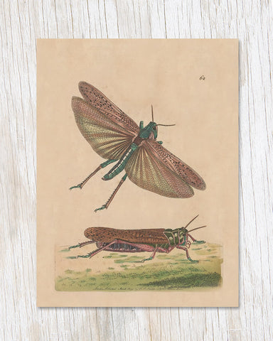Grasshopper Illustration Greeting Card - Cognitive Surplus - 1