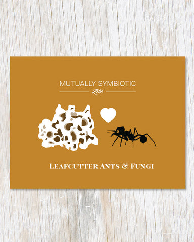 Symbiotic Like Leaf Cutter Ants and Fungi Card - Cognitive Surplus - 1