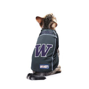 University of Washington Huskies Team Jersey on a Cat