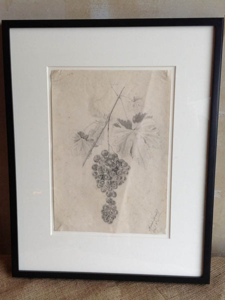 Antique Pencil Drawing Of Grapes - Mercato Antiques - 1