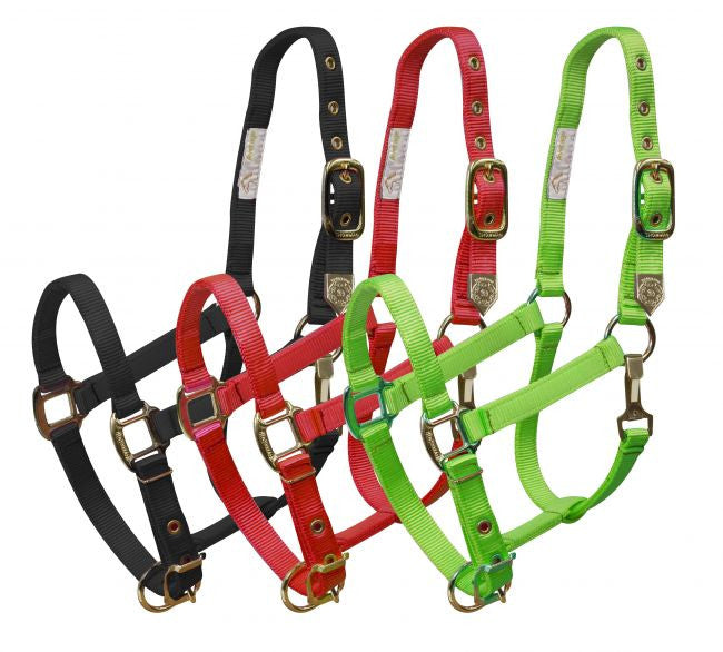 Showman Large horse size adjustable nose & throat latch halter is constructed of premium nylon and brass hardware.