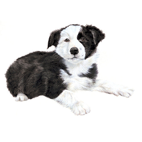 Border Collie Puppy Jumbo Magnet