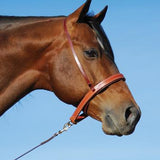 Harness Leather Noseband/Caveson Combo NB100HCAV