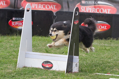 flyball treat2save